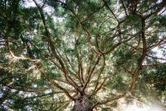Arbre magnifique allumé arrière d'arbre photographie stock