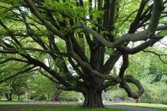 arbre majestueux moulant une ombre photo stock image 50755390. Black Bedroom Furniture Sets. Home Design Ideas