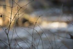 Arbre minuscule devant la rivière Photographie stock