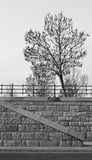 Arbre monochrome Photographie stock