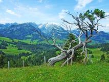 Arbre montagneux pittoresque d'isolement images stock