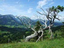 Arbre montagneux pittoresque d'isolement photographie stock