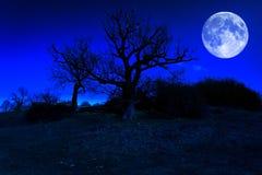 Arbre mort à minuit avec une pleine lune Images libres de droits