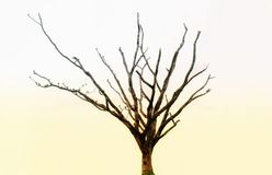 Arbre mort Images stock