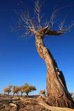 arbre mort Photo libre de droits