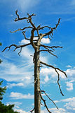 Arbre mort Photo stock