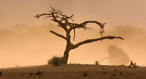 arbre mort Image stock