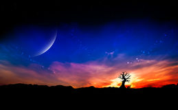 Arbre mort au coucher du soleil Photo libre de droits