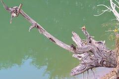 Arbre mort au-dessus de lac Photo stock