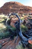 Arbre mort au Roi Canyon, Australien d'Outhback Photos stock