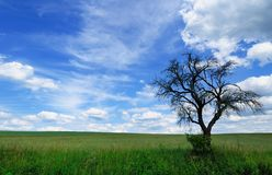 Arbre mort branchu contre un ciel nuageux pittoresque Photos stock