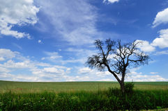 Arbre mort branchu contre un ciel nuageux pittoresque Images stock