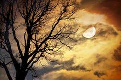 Arbre mort contre la lune et les nuages Photographie stock
