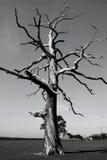 Arbre mort dans à fond gris Photo libre de droits