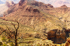 Arbre mort dans Grand Canyon Images stock