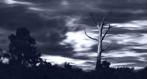 Arbre mort dans la tempête Images libres de droits