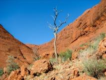 Arbre mort dans la vallée du vent, les olgas Image stock