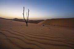 Arbre mort dans un désert Photo libre de droits