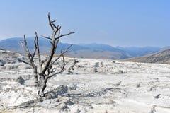 Arbre mort dans un paysage stérile - parc national de Yellowstone Photographie stock libre de droits