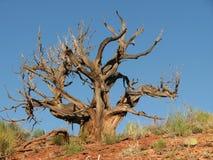Arbre mort de désert Photographie stock libre de droits