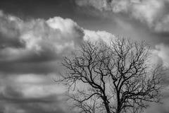 Arbre mort de silhouette sur le ciel dramatique foncé et fond blanc de nuages pour effrayant ou la mort Nuit de Halloween Désespé photos libres de droits