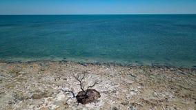 Arbre mort dedans par l'océan photos stock