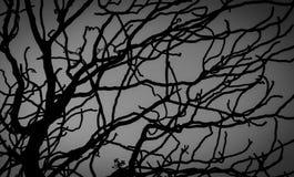 Arbre mort et branche d'isolement sur le fond blanc Branches noires de contexte d'arbre Fond de texture de nature Branche d'arbre photographie stock