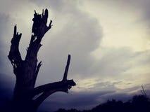Arbre mort isolé et ciel nuageux Nature d'art photos stock