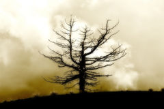 Arbre mort solitaire contre un ciel nuageux, vintage images libres de droits