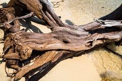 Arbre mort sur la plage Image stock