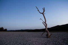 Arbre mort sur la plage Photo stock