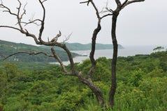 Arbre mort sur le fond de la végétation luxuriante Photos stock