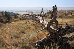 Arbre mort sur le Ridge au fort Robinson State Park, Nébraska Image libre de droits