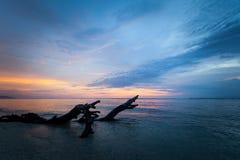 Arbre mort texturisé en mer au coucher du soleil Photographie stock libre de droits