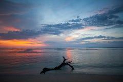 Arbre mort texturisé en mer au coucher du soleil Photo stock