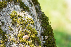 Arbre Moss Closeup Photo stock