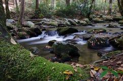 Arbre moussu le long d'une crique débordante de forêt Photo libre de droits