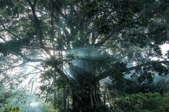 Arbre mystérieux sur le bord de lac de Toba Photo libre de droits