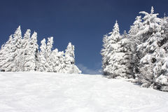 arbre Neige-couvert Photo stock