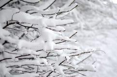 arbre Neige-recroquevillé de branches Fond de tache floue d'hiver images stock
