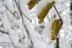 arbre Neige-recroquevillé de branches Fond de tache floue d'hiver photos stock