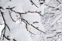 arbre Neige-recroquevillé de branches Fond de tache floue d'hiver photo libre de droits