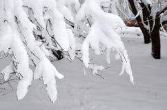 arbre Neige-recroquevillé de branches Fond de tache floue d'hiver photos libres de droits
