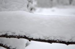 arbre Neige-recroquevillé de branches Fond de tache floue d'hiver photo stock