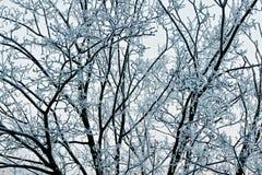 arbre neigeux Photographie stock