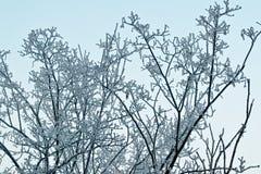 arbre neigeux Image stock