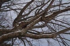 arbre neigeux Image libre de droits