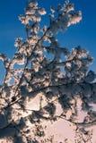 arbre neigeux Images libres de droits