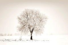 Arbre neigeux chauve dans le domaine en hiver photos stock