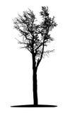 Arbre noir illustration stock